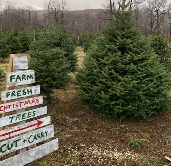 Rooted Christmas Tree: Alaska Made: There's Only One Christmas Tree Farm In