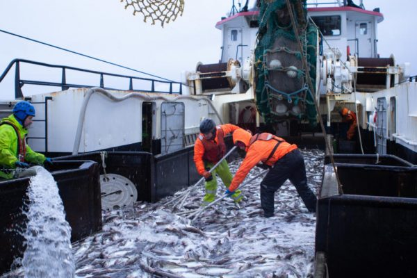 Two crew men shovel a deck full of fish on board a large boat