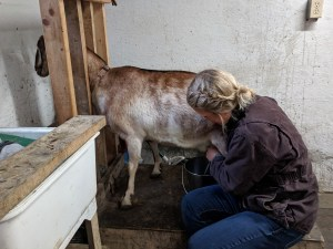 Kodiak goat dairy faces an uncertain future amid proposed budget cuts