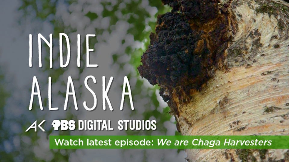 Watch the latest Indie Alaska now!