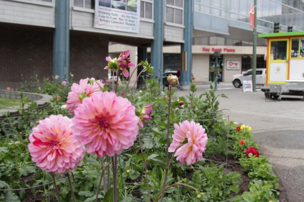A subset of the Anchorage Parks and Recreation Department  plants flowers at the Town Square Park on a recent weekday afternoon.