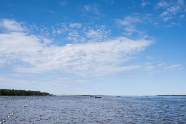 Record warm water likely gave Kuskokwim salmon heart attacks