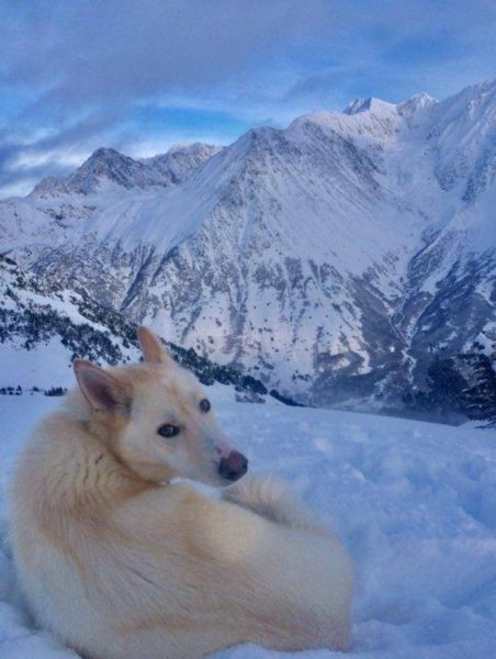 Dogs: Our Outdoor Explorer companions