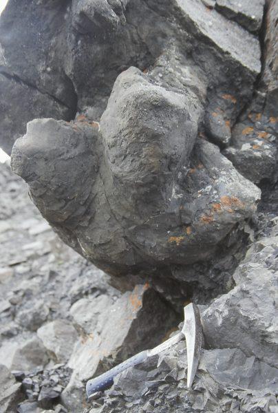 Hadrosaur footprint