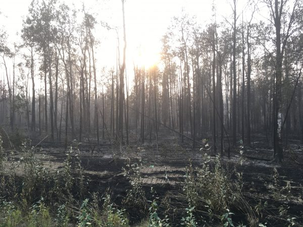 The latest on Southcentral wildfires: Aug. 21, 2019
