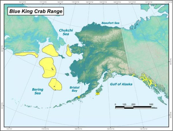 Blue king crab fisheries in the Bering Sea are struggling