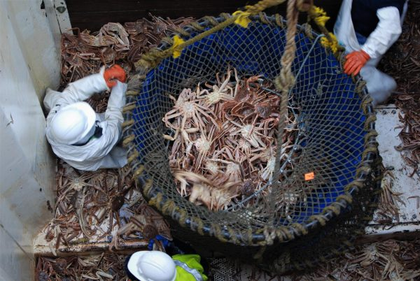 Fisheries managers announce crab quotas, season closures