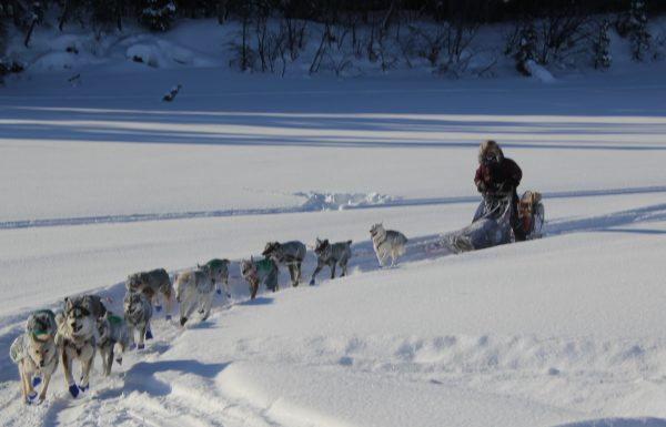 A musher drives dogs through a trail