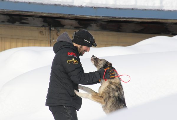 A musher cares for a sled dog on a snow day.