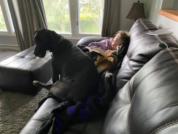 A girl sits in the corner of the couch reading a book under a blanket with a large black dog sitting next to her