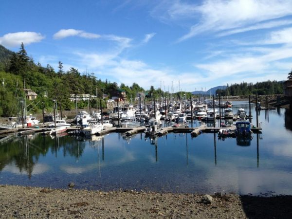 A small harbor with 30-foot fishing boats on a sunny day with large spruce trees nearby.