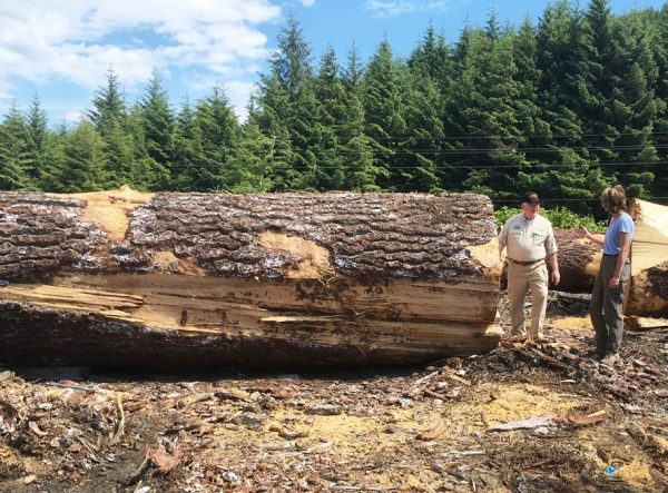 A man stand by a felled log that is as tall as he is as he spseaks with a woman.