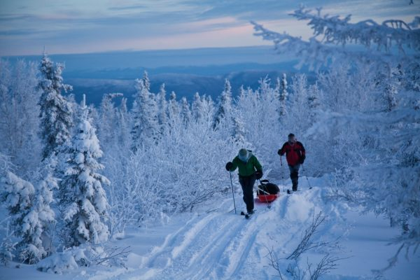 Two skiers in low light in mid winter next to short spruce trees