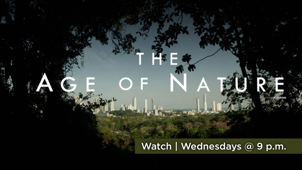 Watch Age of Nature Wednesdays at 9 p.m. on Alaska Public Media TV.