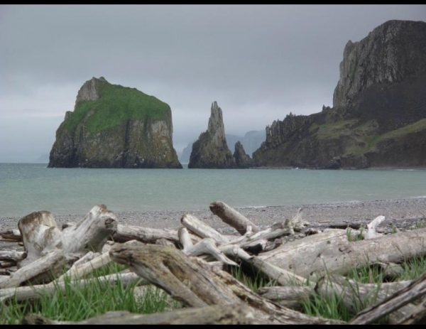 Drift wood in the foreground of a photo of a beach, greenish ocean water and jagged cliffs in the background