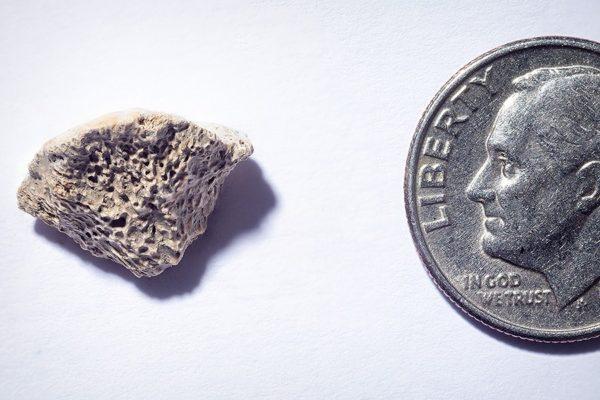 A piece of bone, next to a dime