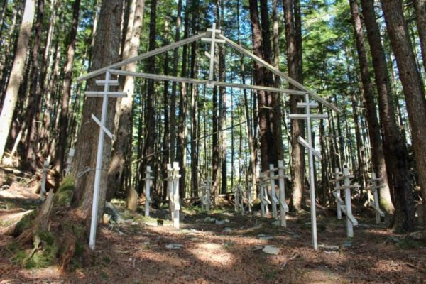 Several white crosses in the trees