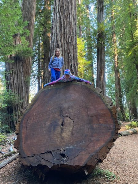 Leif and Tui Stanbury on a giant redwood