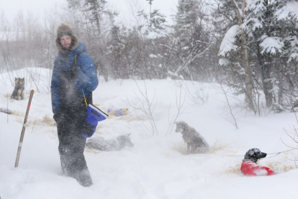 Man in the blowing snow with dogs around him