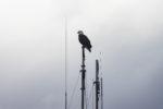 Eagle 0421