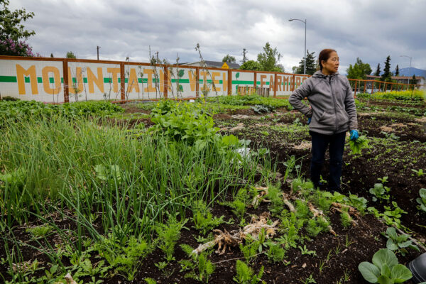 a person stands next to a vegetable garden