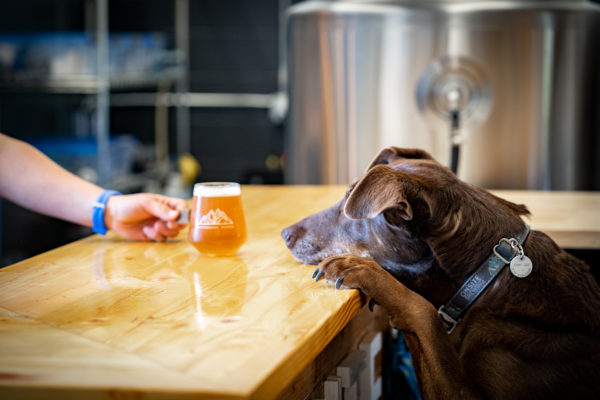 A dog stands with its paws on a counter. A glass of beer sits on the counter.