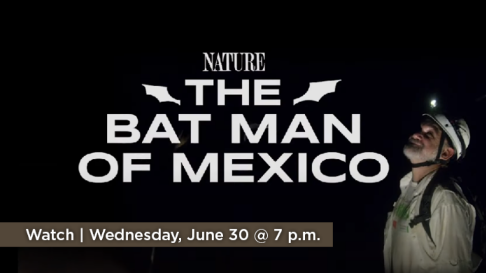 Watch Nature: The Bat Man of Mexico Wednesday, June 30 at 7 p.m. on Alaska Public Media TV.