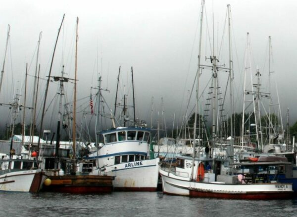 A harbor with a bunch of small fishing boats