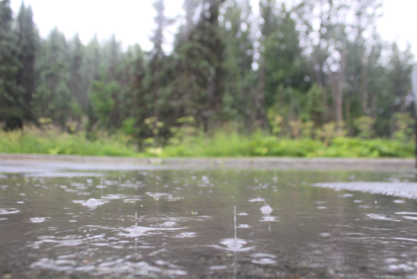 Rain falls in a puddle in front of some woods
