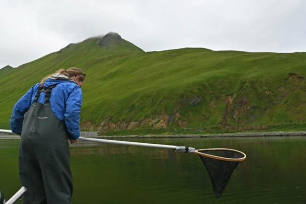 A person in rain gear suspenders looks over the side of a boat with a dip net with green mountains in the background