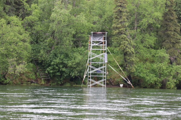 A scaffolding tower stands in the river.