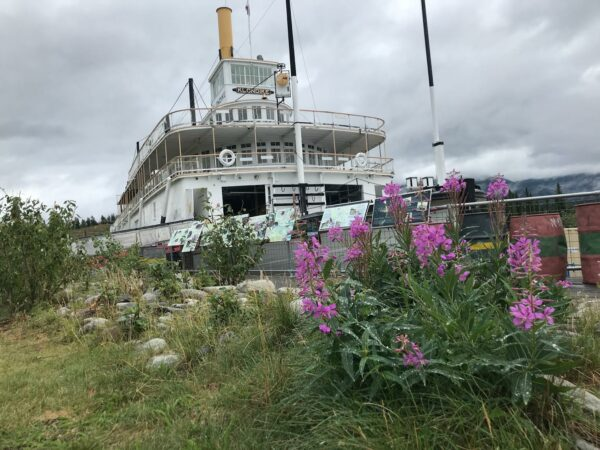 A large white boat behind fireweed.